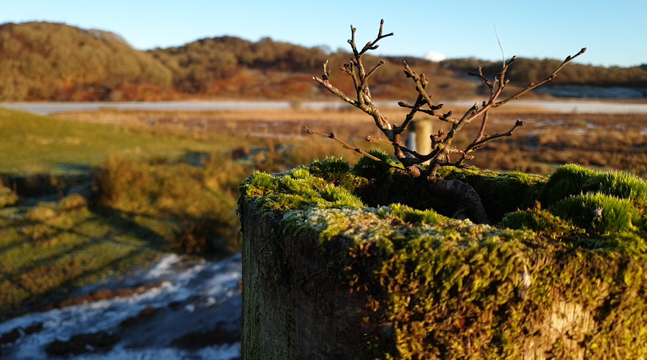 Mossy fence post in Scottish Highland landscape